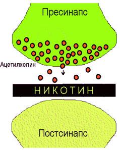 brosit_kurit_ris_2
